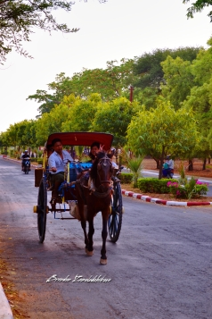 Horse Carriage Bagan Myanmar