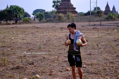 Agricultural Land Bagan Myanmar